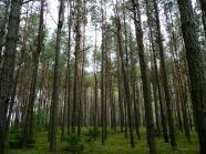Mój ulubiony las