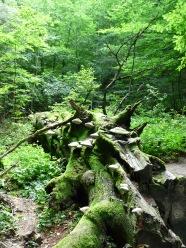 Rezerwat Bukowa Góra