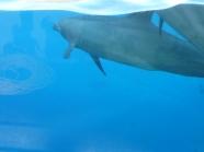 Delfiny 2
