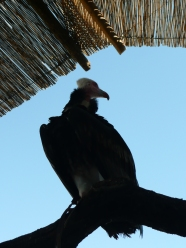 Pokaz ptaków 1