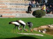 Pokaz ptaków